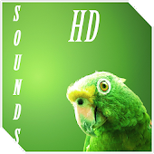 Parrot Bird sounds
