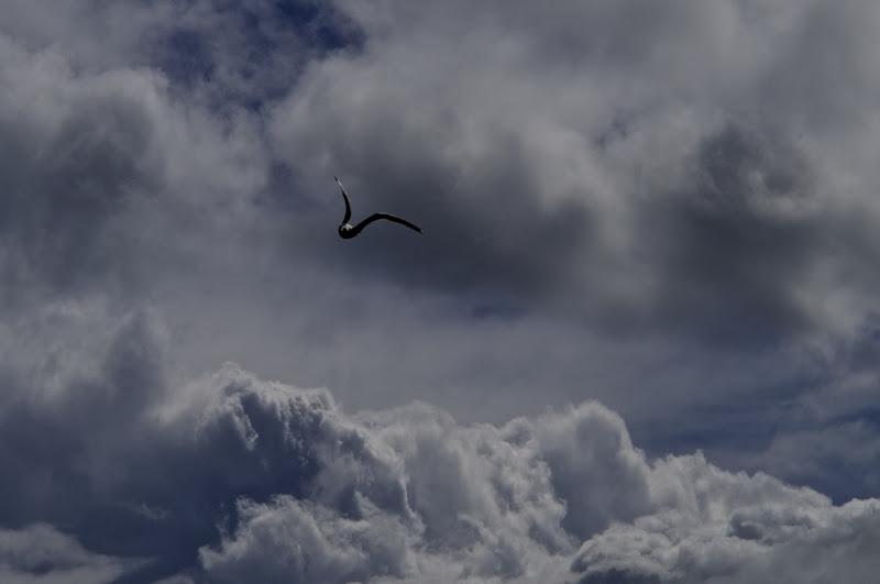 Gabbiano e nuvole di Ltz/rivadestra