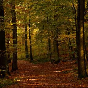 lights in the shadows by Abhinav Ganorkar - City,  Street & Park  City Parks ( herbst, forest, autumn colors, autumn leaves, autumn,  )