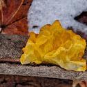 Golden jelly fungus