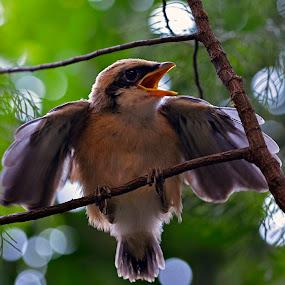 wild 1 by Yadi Setiadi - Animals Birds