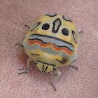 Picasso Bug or Zulu Hud Bug