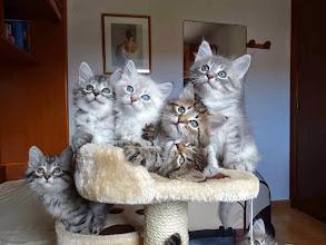 Photo: Shiva, Snow, Sían, Segovax, Sven y Sasha