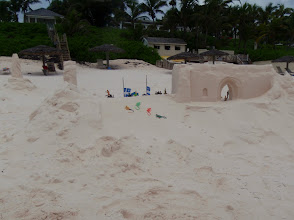 Photo: lizards attach the temple on the beach at Harbor Island