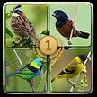 Todos em 1-Cantos dos Pássaros APK