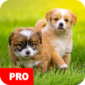 Puppy Wallpapers PRO icon