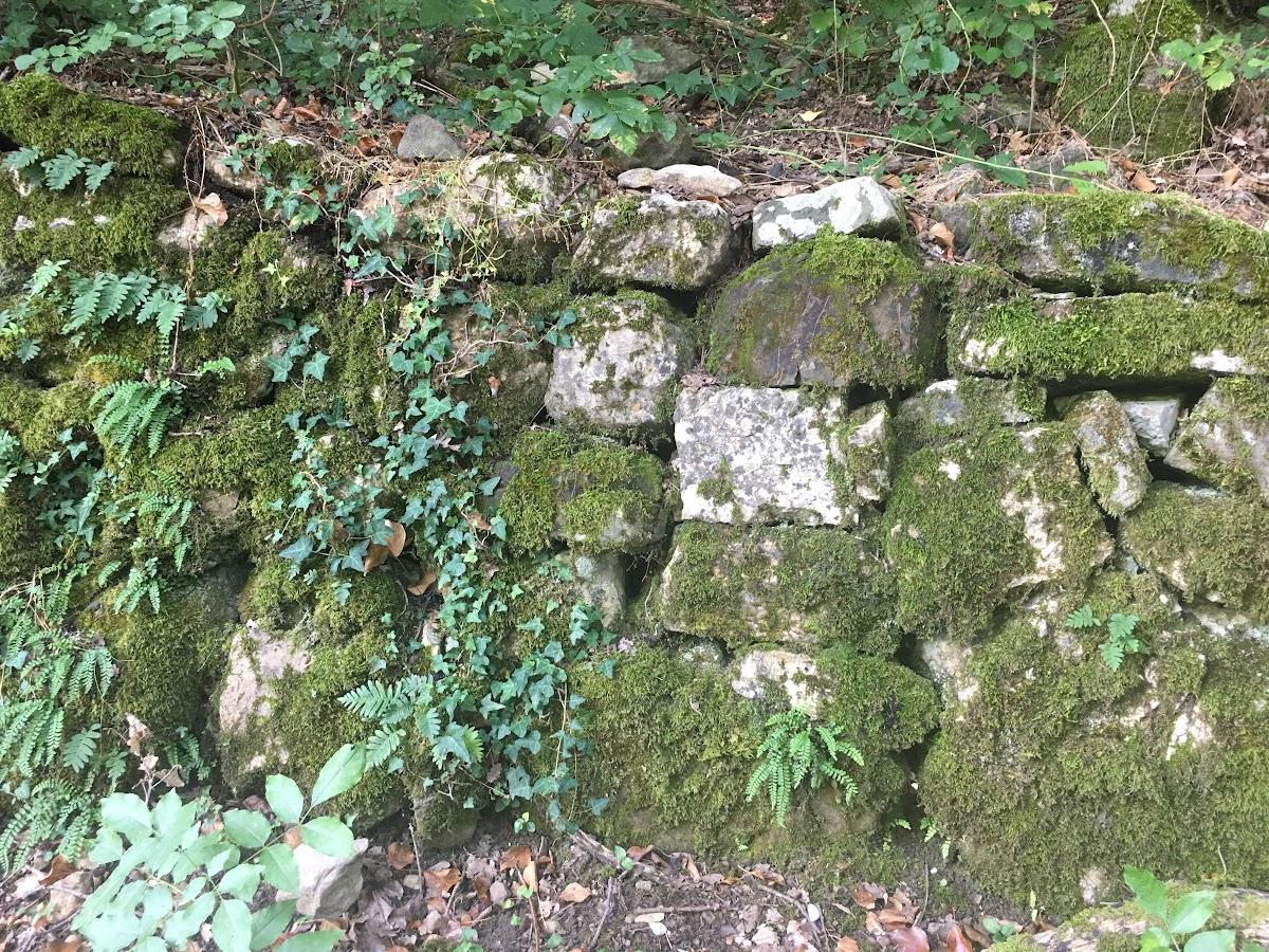 47Ancient walls in the Poggio all'Olmo nature reserve, Castigliocello Bandini, Tuscany