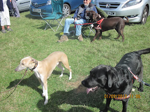 Photo: In the foreground Henry Whippet and Dicer Lab, in the background John with Winston Lab
