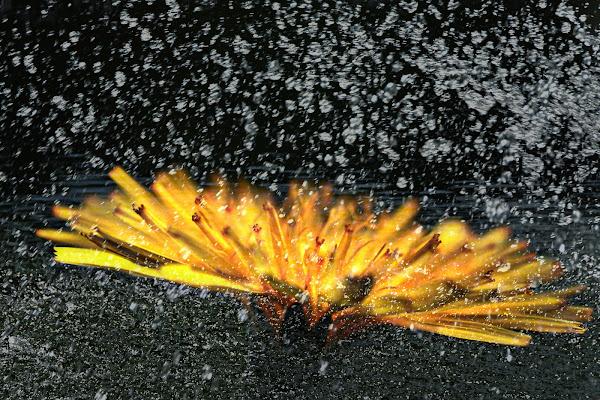 Esplosione di borik57