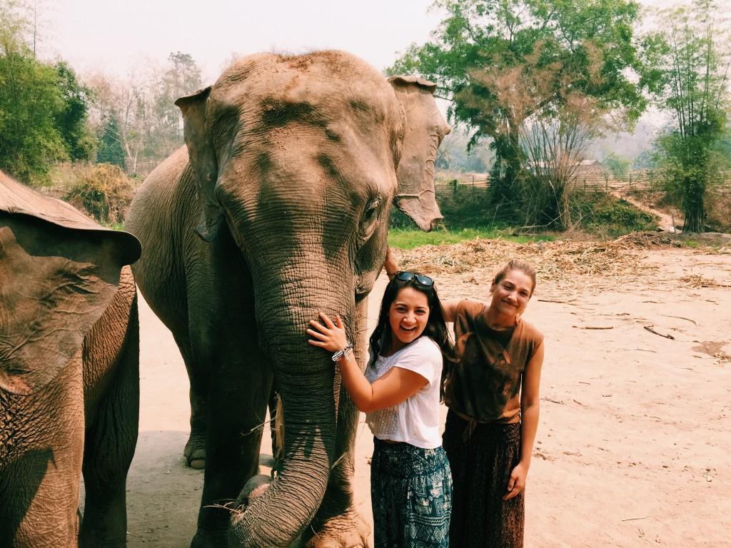 Meeting 'Momma Elephant'