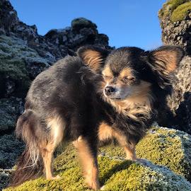 Mússa by Bjarklind Þór - Animals - Dogs Portraits