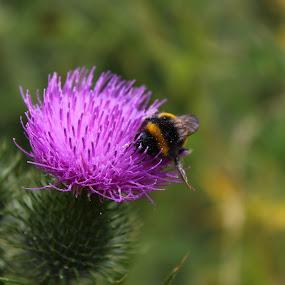 Pollinating bee by Matt Gullick - Nature Up Close Flowers - 2011-2013