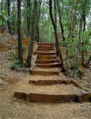 Vieni, c'è una scala nel bosco... di Angela1964