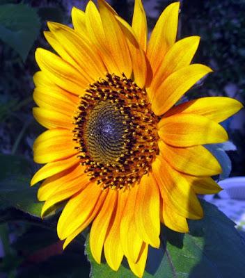 Il re dei fiori di feeviviane
