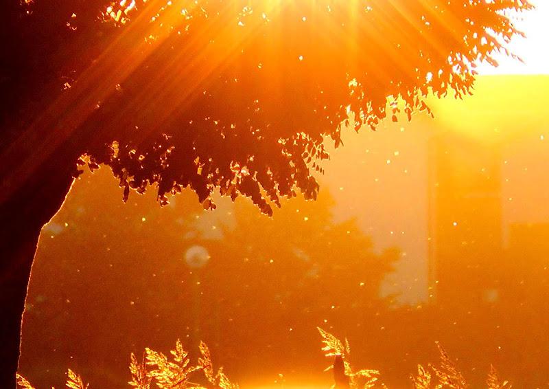 Light & Tree di ytse_jam