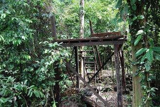 Photo: The Orang feeding platform in Sepilok