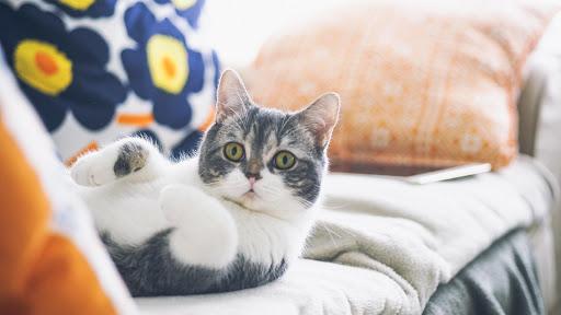 Cute Cat Live Wallpaper: fondos de pantalla hd capturas de pantalla 9