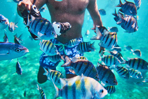 Cozumel is a great place for warm-water snorkeling during a Carnival cruise to the tropics.