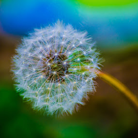 RUCOLA by Alexandru Bogdan Grigore - Nature Up Close Leaves & Grasses ( green, sparks, reflection, nature up close, flower )