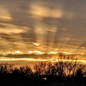 Heavenly Sunset  by Jennifer Smusz - Landscapes Sunsets & Sunrises ( #trees, #godly, #michigan, #heavenly, #heavens, #sunset )