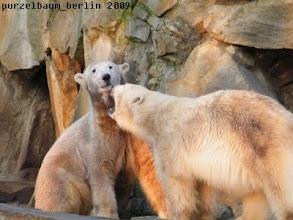 Photo: Gianna hat es wieder auf Knuts Bart abgesehen ;-)