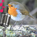 Robin sounds and calls icon