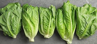 Romaine Lettuce Nutrition, Benefits and Recipes - Dr. Axe