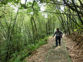 Photo: 竹林的美與一般樹林有不同的感受,這翠綠的桂竹林感覺真不錯!