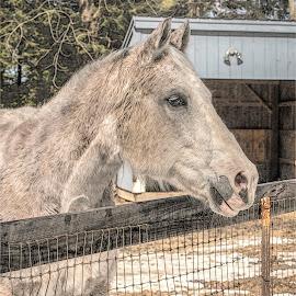 by Bill Gordon - Animals Horses (  )