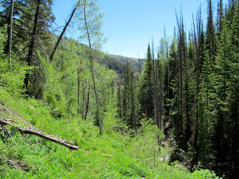 Photo: View down-canyon