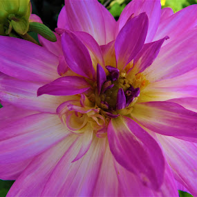 The warmth of the early spring by Elenka Smilenova - Flowers Single Flower ( macro flowers garden spring )
