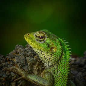 An Ant 🐜 On My 🦎 Face... by Suman Basak - Animals Reptiles ( nature, green, wildlife, reptile, ant )