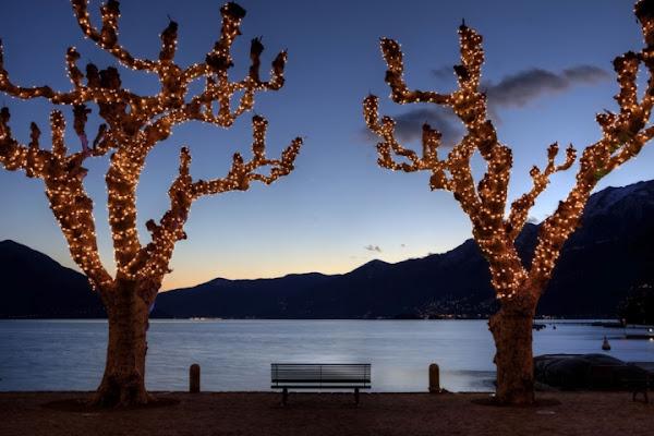 Platani di Natale di Ticino-Joana