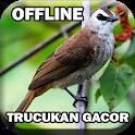 Kicau Burung Trucukan Gacor icon