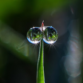 duo dew by Kawan Santoso - Nature Up Close Natural Waterdrops
