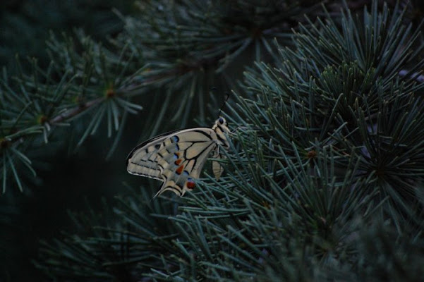 Batterfly di Marco Zeuli