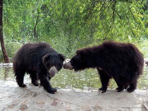 Photo: Healthy looking happy Bears