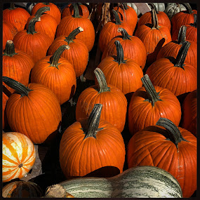 Welcome Fall by Mary Phelps - Public Holidays Halloween ( halloween, fall, nashville, autumn, pumpkin, iphone )