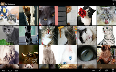 Cat Wallpapers 4 0 Seedroid