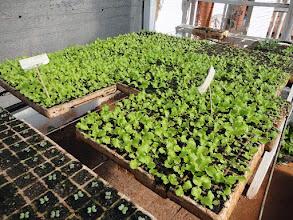 Photo: Mudas das hortaliças