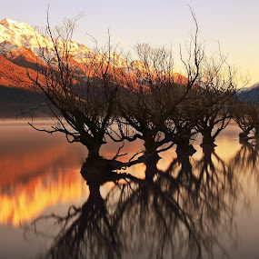 Willows of Glenorchy by Jomy Jose - Landscapes Waterscapes ( willows, queenstown, trees in water, south island, willows of glenorchy, snow mountain, paradise, glenorchy, new zealand,  )