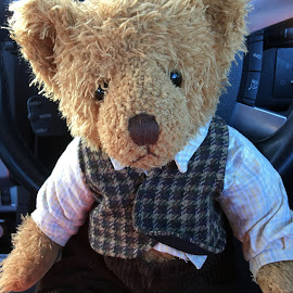 Poppy Ted  Want to go for a Drive by Dawn Simpson - Instagram & Mobile iPhone ( cuddly, toy bear, ted, old fashioned, vest, teddy bear )