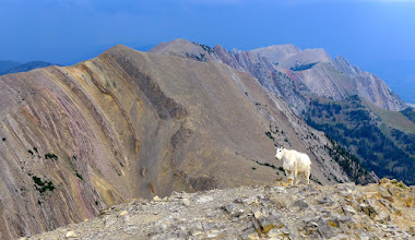 Photo: Goat on summit of Sac with Hardscrabble behind it.