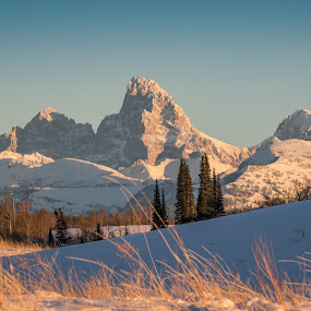 The Grand by Chad Roberts - Landscapes Mountains & Hills ( mountains, winter, snow, pine trees, scenery, the grand, grand tetons,  )
