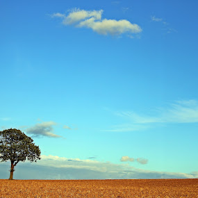 Just One To The Field by Mircea Bogdan - Landscapes Prairies, Meadows & Fields ( tree, nature landscape, filed )