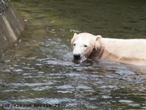 Photo: Eine Runde Schwimmen ;-)