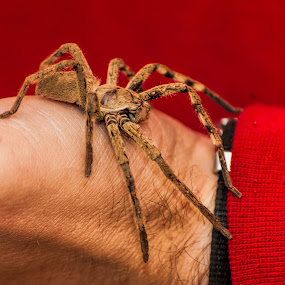Unwelcomed guest by Eric Klein - Animals Insects & Spiders