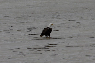 Photo: Ice fishing, 3/15/2010