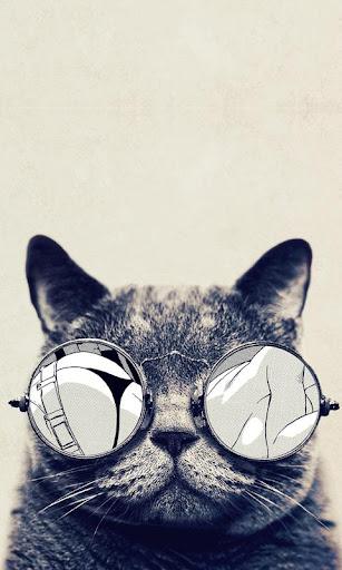 可愛貓咪 Lwp