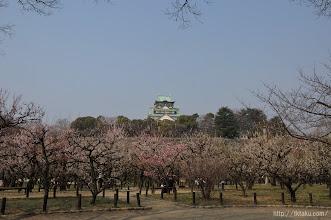 Photo: 2014年の梅花シーズンは、(2014,03,16)